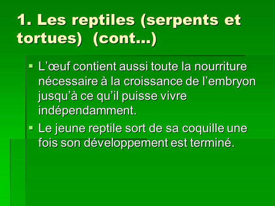 1. Les reptiles (serpents et tortues) (cont…) Lœuf contient aussi toute la nourriture nécessaire à la croissance de lembryon jusquà ce quil puisse viv