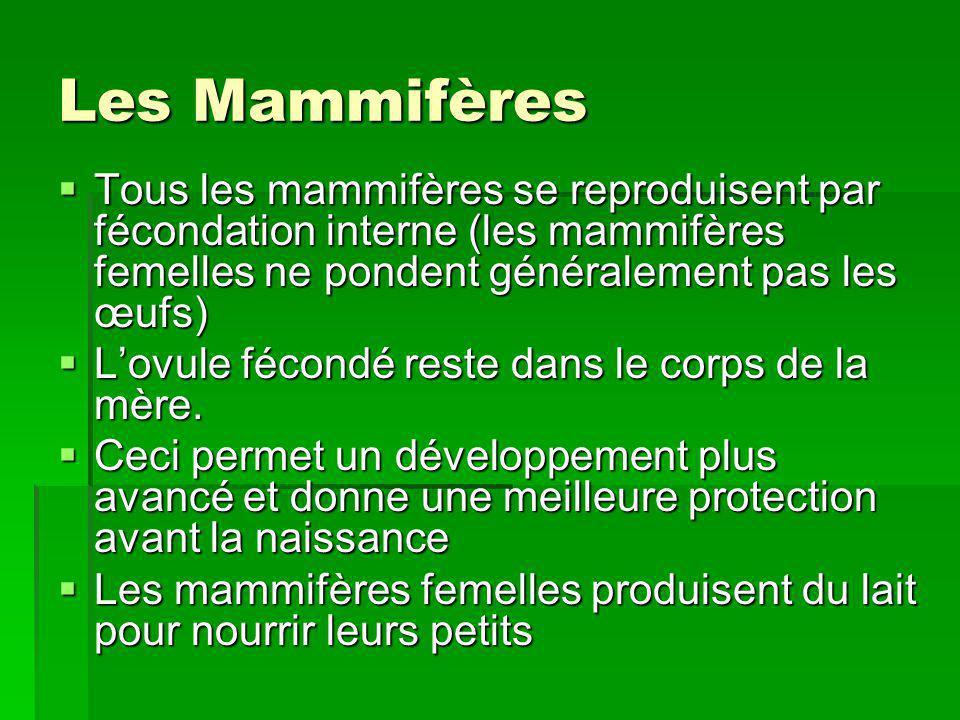 Les Mammifères Tous les mammifères se reproduisent par fécondation interne (les mammifères femelles ne pondent généralement pas les œufs) Tous les mam