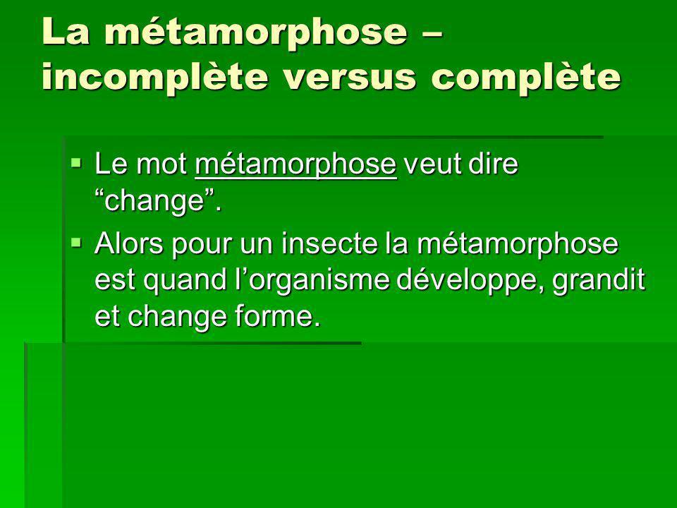 La métamorphose – incomplète versus complète Le mot métamorphose veut dire change. Le mot métamorphose veut dire change. Alors pour un insecte la méta