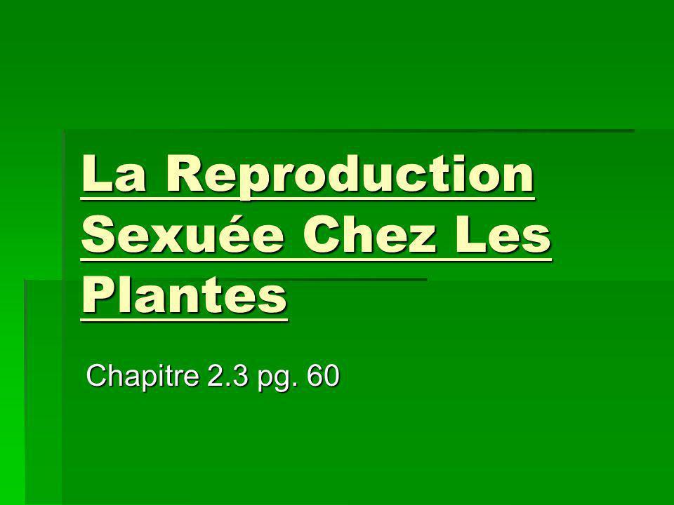 La Reproduction Sexuée Chez Les Plantes Chapitre 2.3 pg. 60
