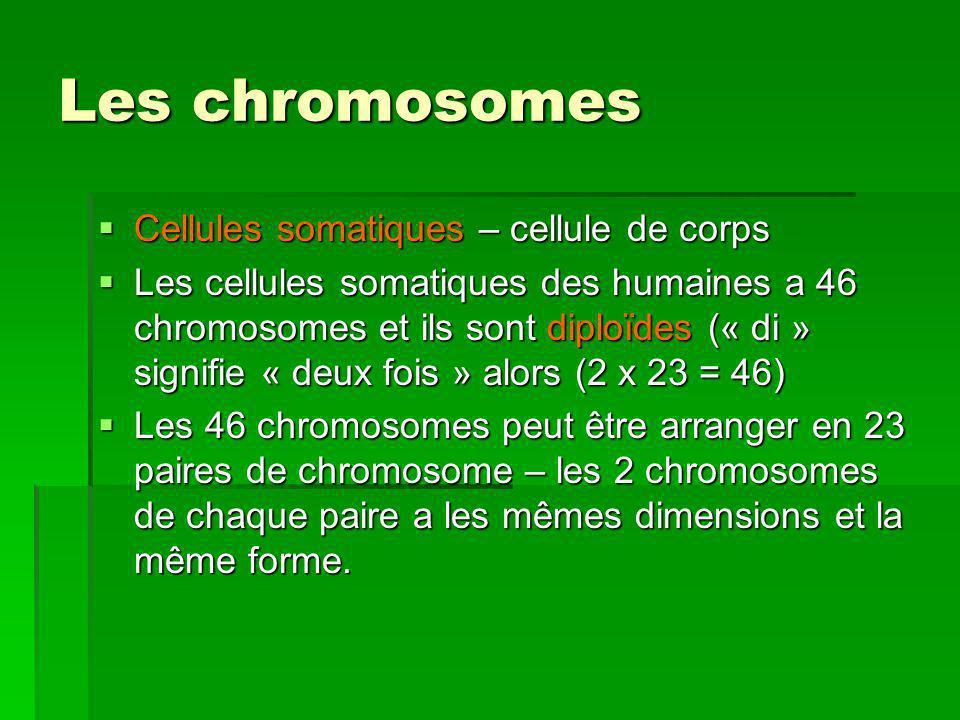 Les chromosomes Les gamètes possèdent 23 chromosomes et ils sappellent haploïdes (« haplo » vient du grec haplos, qui signifie « simple »).