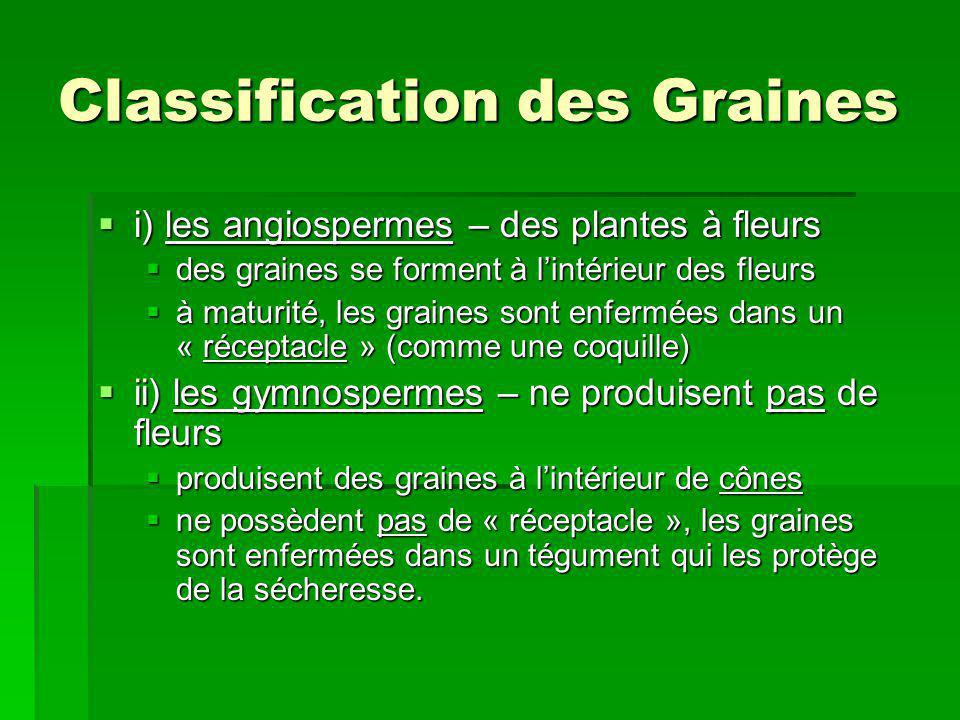 Classification des Graines i) les angiospermes – des plantes à fleurs i) les angiospermes – des plantes à fleurs des graines se forment à lintérieur d