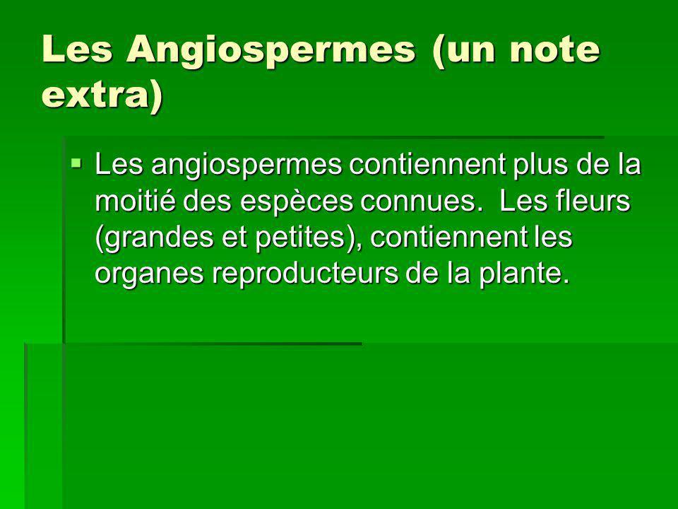 Les Angiospermes (un note extra) Les angiospermes contiennent plus de la moitié des espèces connues. Les fleurs (grandes et petites), contiennent les