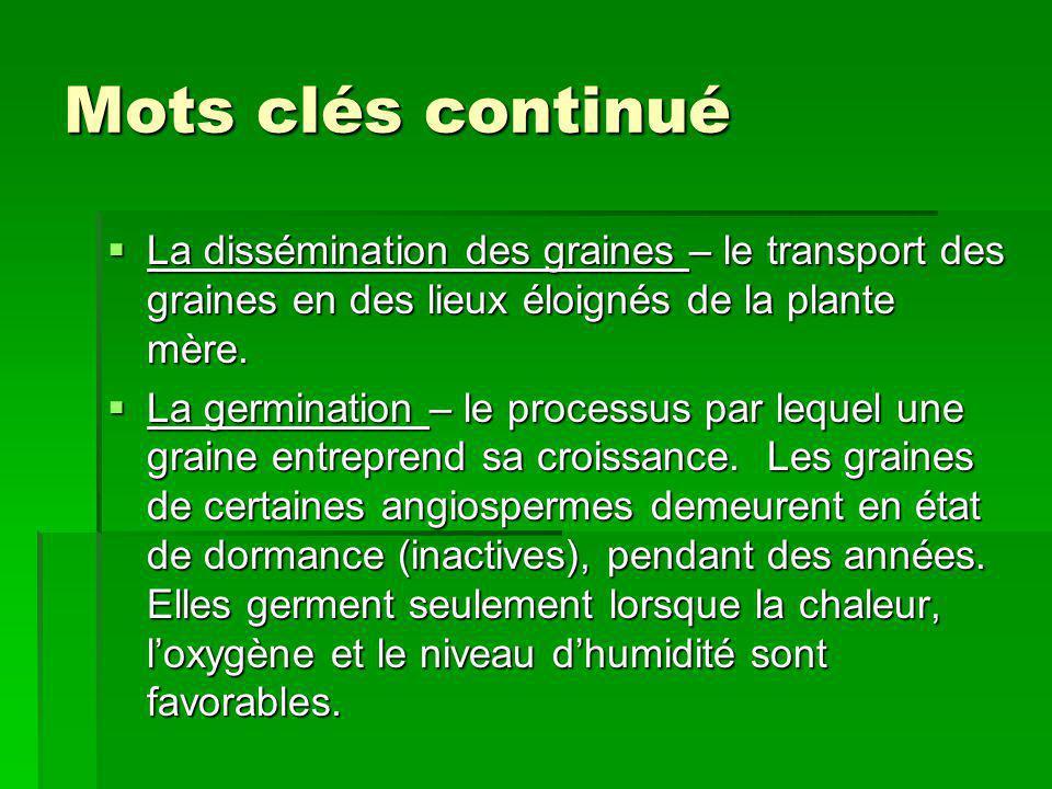 Mots clés continué La dissémination des graines – le transport des graines en des lieux éloignés de la plante mère. La dissémination des graines – le