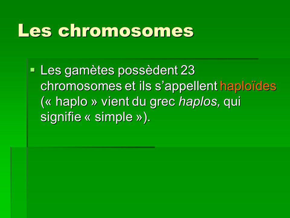 Les chromosomes Les gamètes possèdent 23 chromosomes et ils sappellent haploïdes (« haplo » vient du grec haplos, qui signifie « simple »). Les gamète