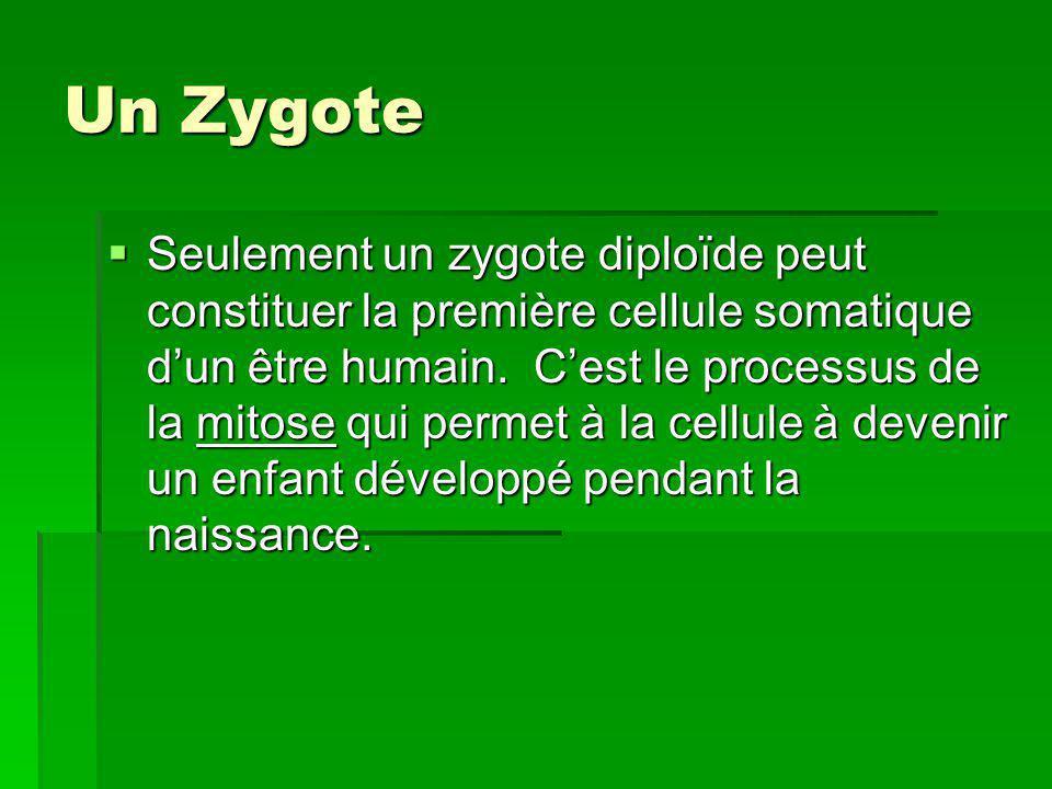 Un Zygote Seulement un zygote diploïde peut constituer la première cellule somatique dun être humain. Cest le processus de la mitose qui permet à la c