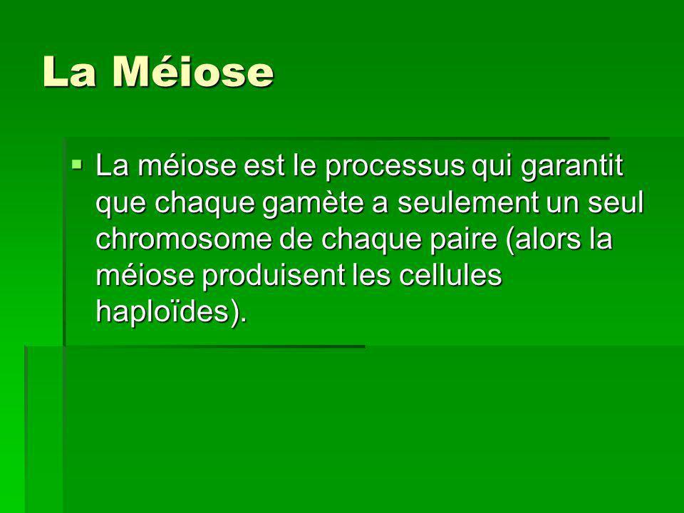 La Méiose La méiose est le processus qui garantit que chaque gamète a seulement un seul chromosome de chaque paire (alors la méiose produisent les cel