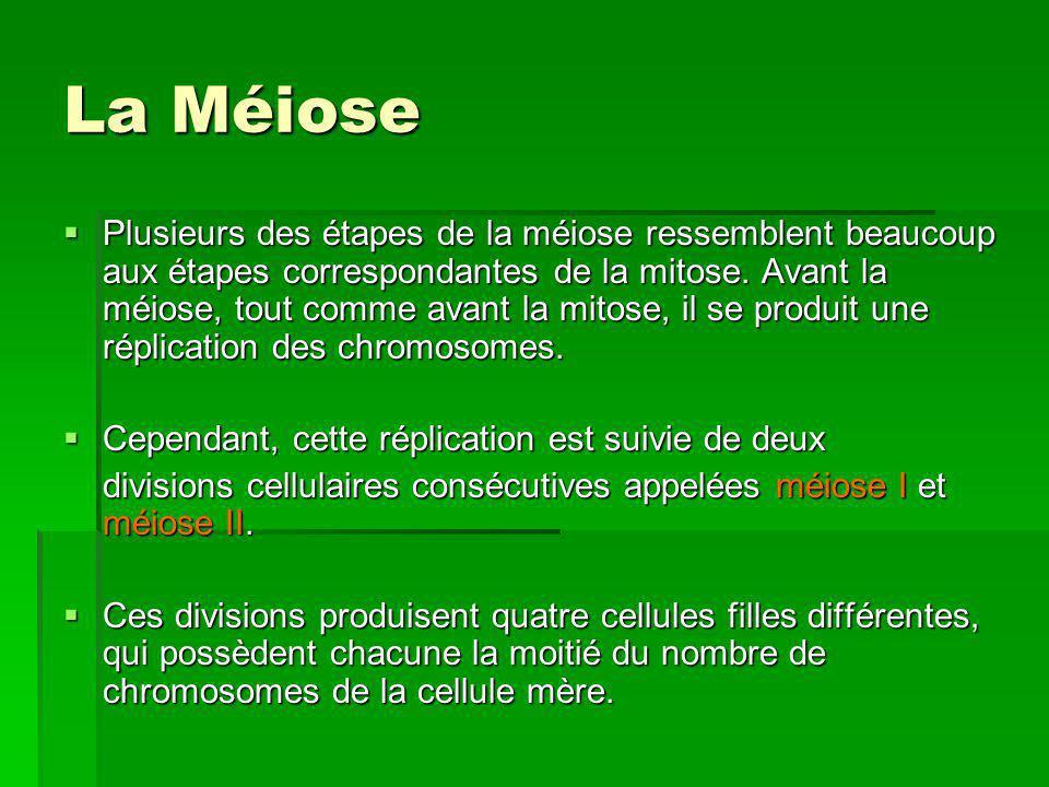 La méiose et les gamètes Enjambement – léchange dADN entre des paires de chromosomes homologues pendant la méiose.
