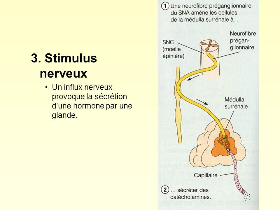 3. Stimulus nerveux Un influx nerveux provoque la sécrétion dune hormone par une glande.