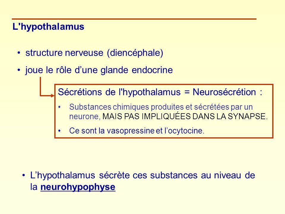 L'hypothalamus structure nerveuse (diencéphale) joue le rôle dune glande endocrine Sécrétions de l'hypothalamus = Neurosécrétion : Substances chimique