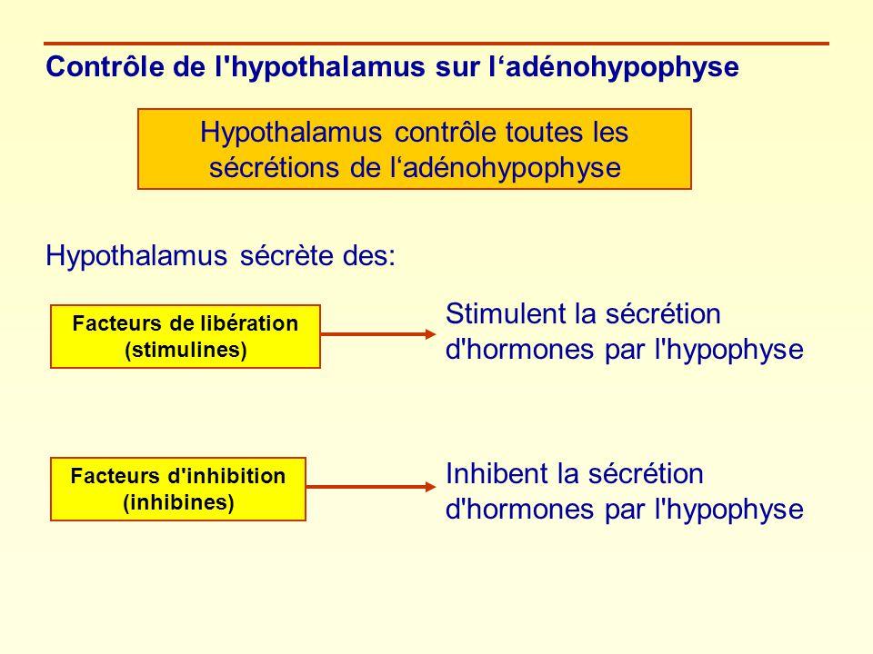 Contrôle de l'hypothalamus sur ladénohypophyse Hypothalamus contrôle toutes les sécrétions de ladénohypophyse Hypothalamus sécrète des: Facteurs de li