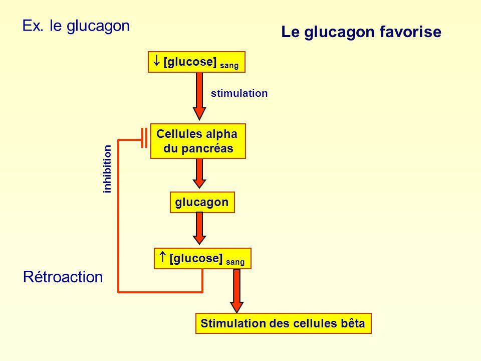 Ex. le glucagon glucagon [glucose] sang Cellules alpha du pancréas [glucose] sang stimulation inhibition Rétroaction Stimulation des cellules bêta Le