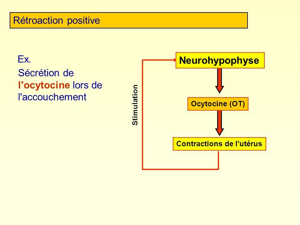 Rétroaction positive Stimulation Ex. Sécrétion de l'ocytocine lors de l'accouchement Contractions de l'utérus Neurohypophyse Ocytocine (OT)