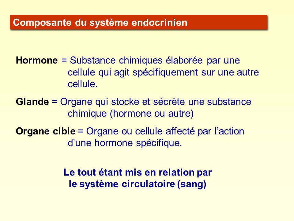 Composante du système endocrinien Hormone = Substance chimiques élaborée par une cellule qui agit spécifiquement sur une autre cellule. Glande = Organ