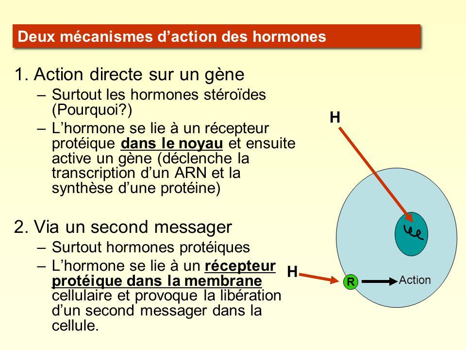 1. Action directe sur un gène –Surtout les hormones stéroïdes (Pourquoi?) –Lhormone se lie à un récepteur protéique dans le noyau et ensuite active un