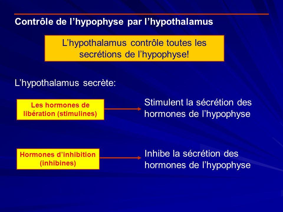 Contrôle de lhypophyse par lhypothalamus Lhypothalamus contrôle toutes les secrétions de lhypophyse! Lhypothalamus secrète: Les hormones de libération