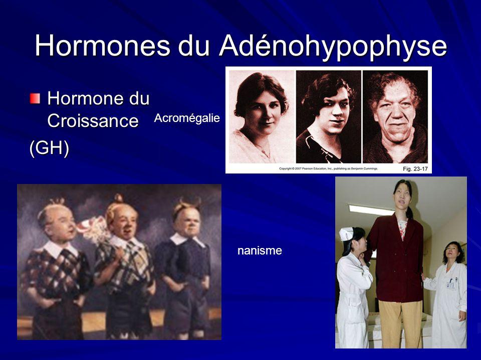 Hormones du Adénohypophyse Hormone du Croissance (GH) Acromégalie nanisme