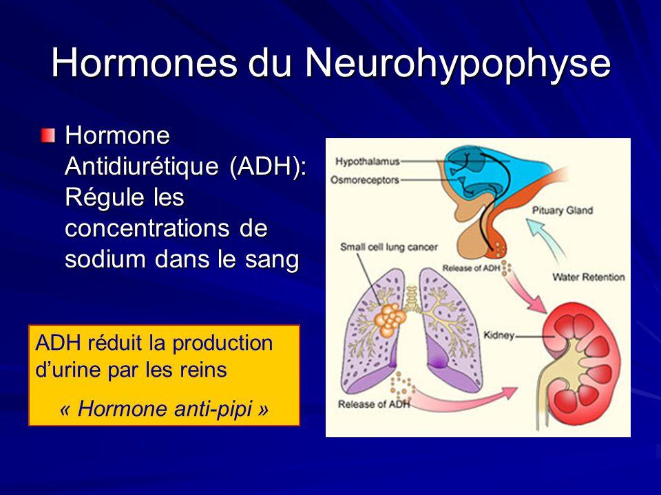 Hormones du Neurohypophyse Hormone Antidiurétique (ADH): Régule les concentrations de sodium dans le sang ADH réduit la production durine par les rein