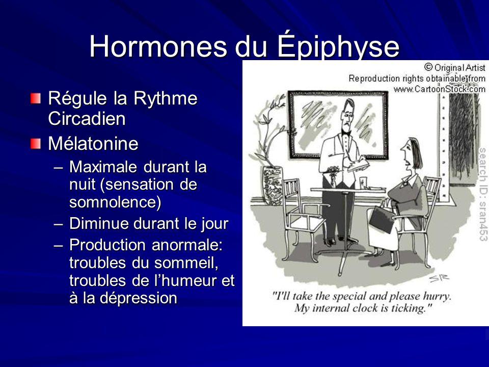 Hormones du Épiphyse Régule la Rythme Circadien Mélatonine –Maximale durant la nuit (sensation de somnolence) –Diminue durant le jour –Production anor