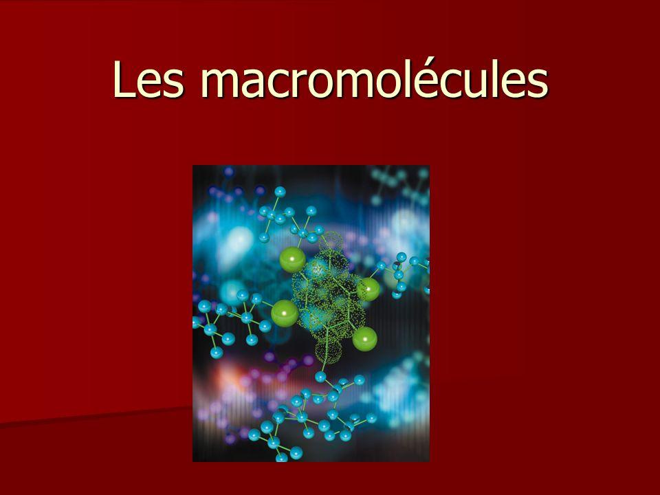 Les macromolécules