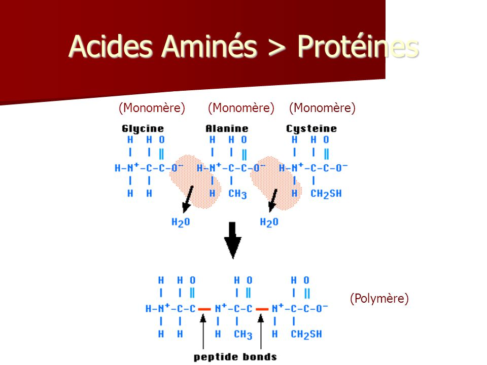 Acides Aminés > Protéines (Monomère) (Polymère)