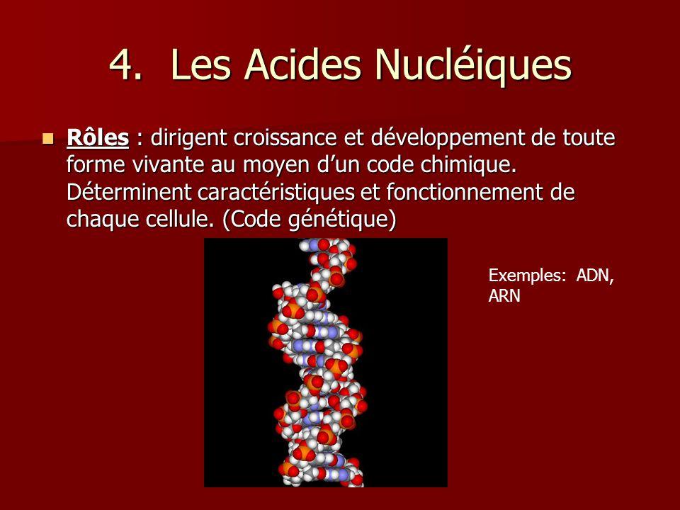 4. Les Acides Nucléiques Rôles : dirigent croissance et développement de toute forme vivante au moyen dun code chimique. Déterminent caractéristiques