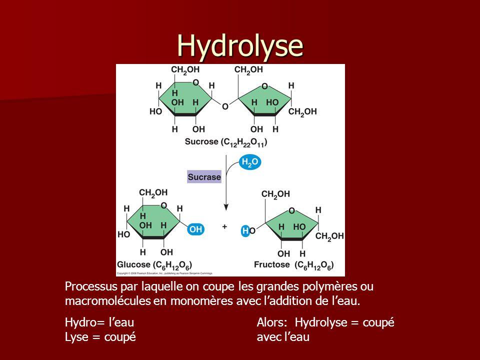 Hydrolyse Processus par laquelle on coupe les grandes polymères ou macromolécules en monomères avec laddition de leau. Hydro= leauAlors: Hydrolyse = c