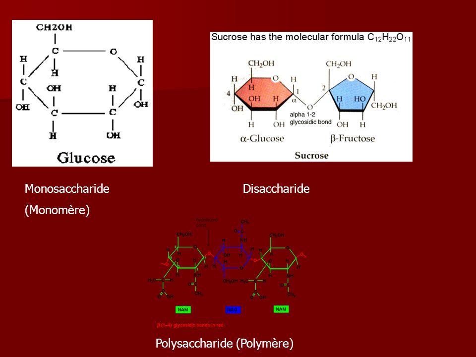 Monosaccharide (Monomère) Disaccharide Polysaccharide (Polymère)