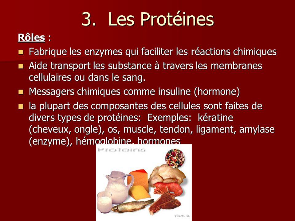 3. Les Protéines Rôles : Fabrique les enzymes qui faciliter les réactions chimiques Fabrique les enzymes qui faciliter les réactions chimiques Aide tr