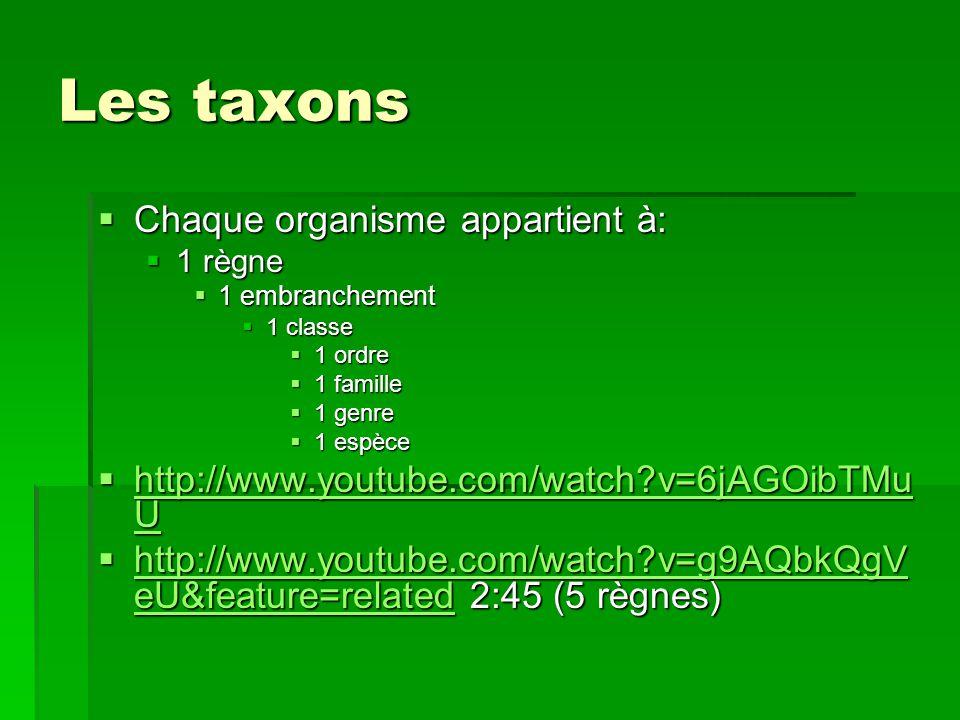 Les taxons Chaque organisme appartient à: Chaque organisme appartient à: 1 règne 1 règne 1 embranchement 1 embranchement 1 classe 1 classe 1 ordre 1 o