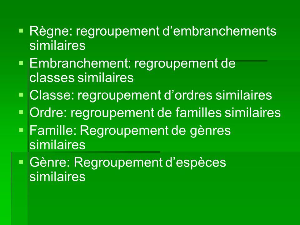 Règne: regroupement dembranchements similaires Embranchement: regroupement de classes similaires Classe: regroupement dordres similaires Ordre: regrou