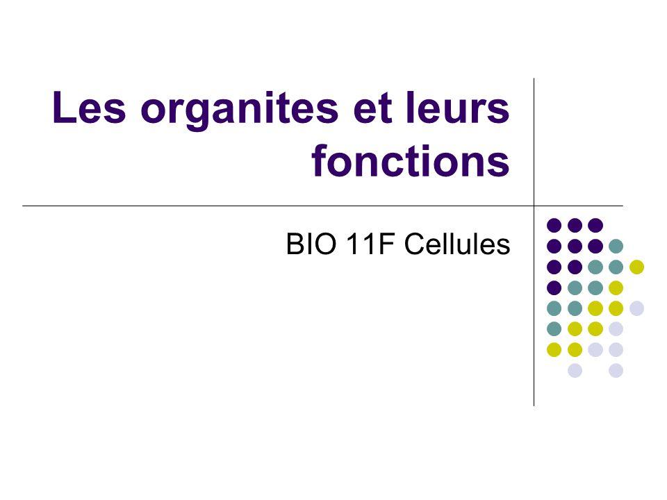 Les organites et leurs fonctions BIO 11F Cellules