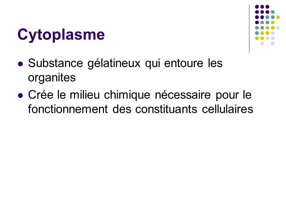 Cytoplasme Substance gélatineux qui entoure les organites Crée le milieu chimique nécessaire pour le fonctionnement des constituants cellulaires