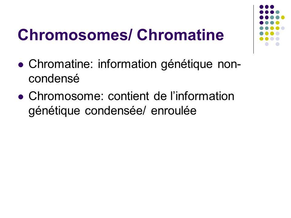 Pores nucléaires Ouvertures de la membrane nucléaire Laissent entrer les macromolécules et sortir les ribosomes