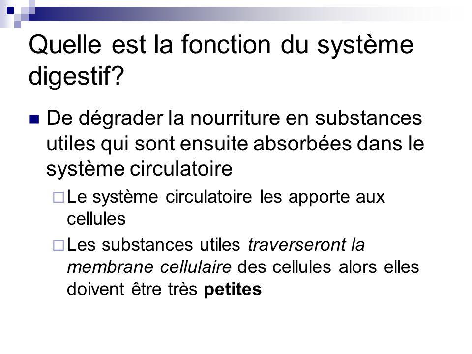 Quelle est la fonction du système digestif? De dégrader la nourriture en substances utiles qui sont ensuite absorbées dans le système circulatoire Le