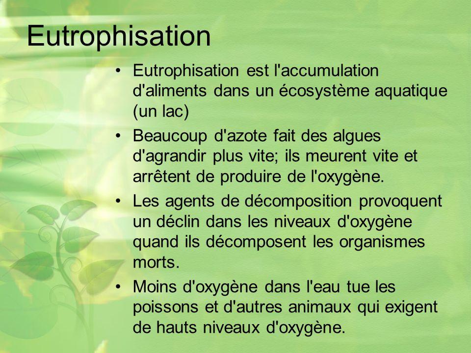 Eutrophisation Eutrophisation est l accumulation d aliments dans un écosystème aquatique (un lac) Beaucoup d azote fait des algues d agrandir plus vite; ils meurent vite et arrêtent de produire de l oxygène.