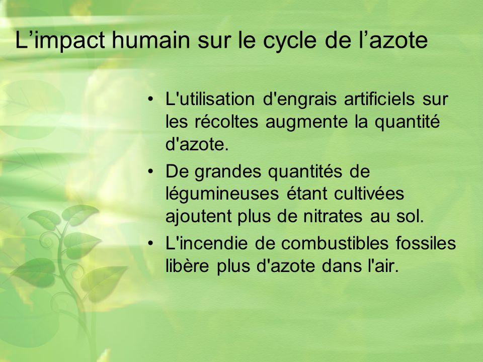 Limpact humain sur le cycle de lazote L utilisation d engrais artificiels sur les récoltes augmente la quantité d azote.
