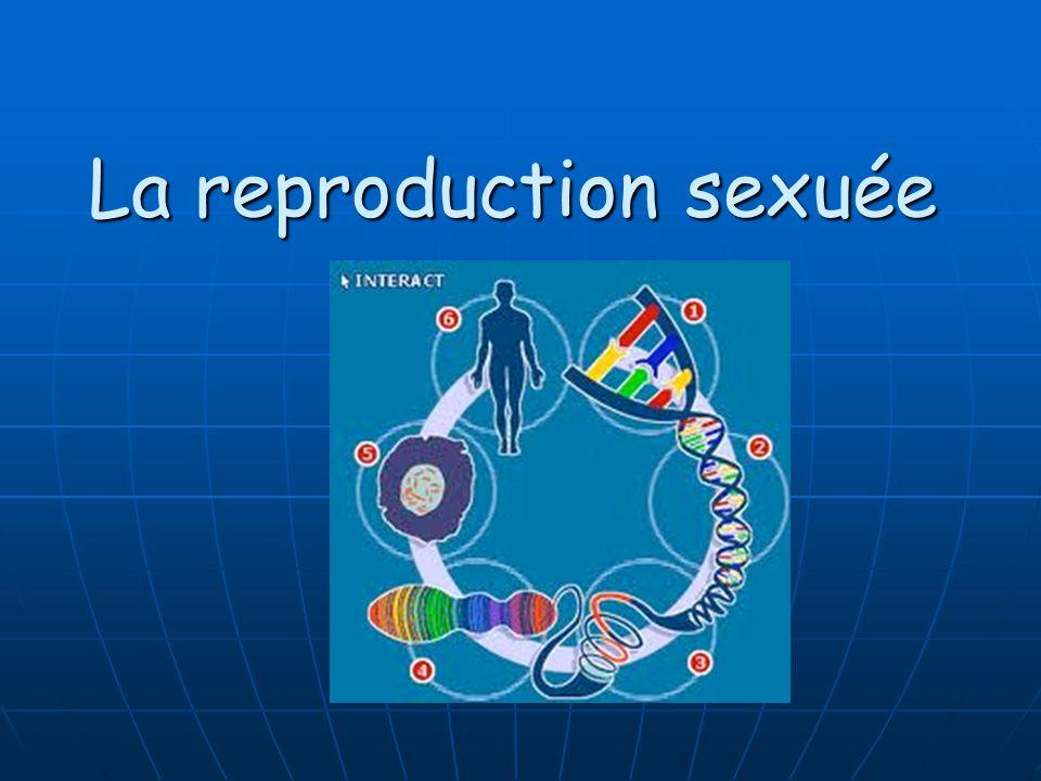 La Reproduction des Cellules Il y a deux types de reproduction: La reproduction asexuée La reproduction asexuée La reproduction sexuée La reproduction sexuée