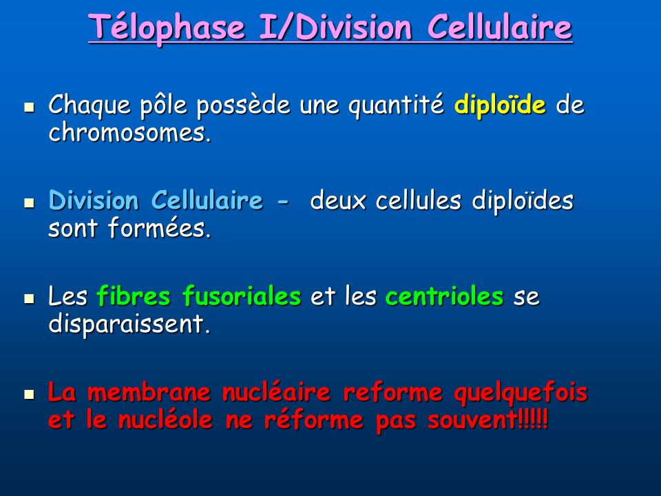 Télophase I/Division Cellulaire Chaque pôle possède une quantité diploïde de chromosomes.
