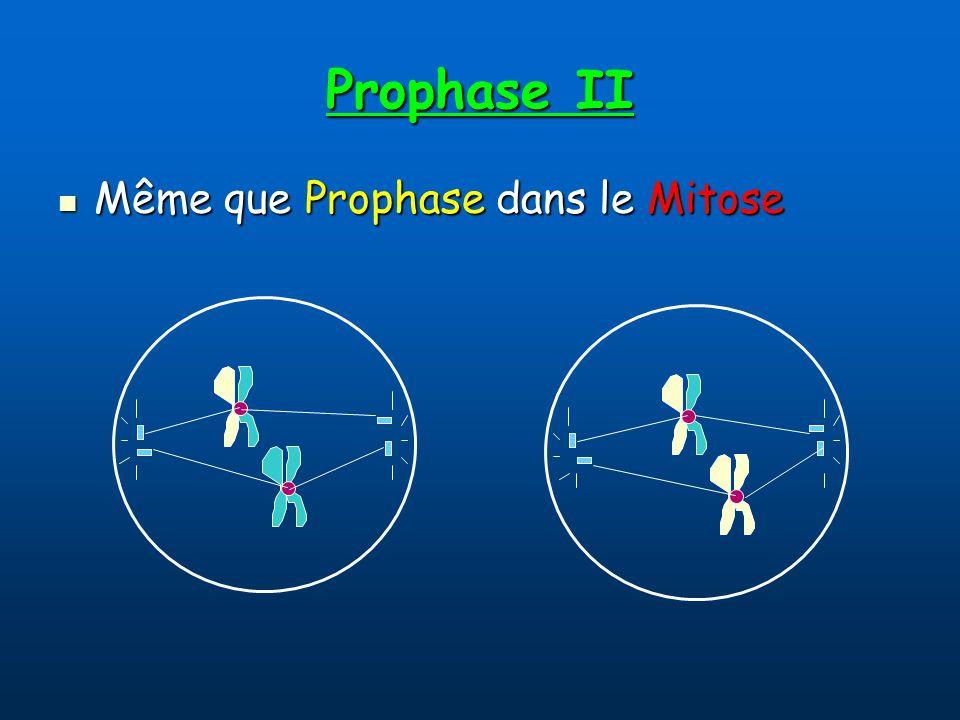 Prophase II Même que Prophase dans le Mitose Même que Prophase dans le Mitose