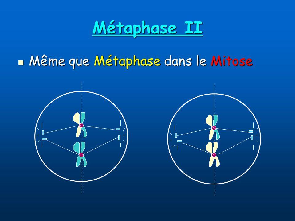 Métaphase II Même que Métaphase dans le Mitose Même que Métaphase dans le Mitose
