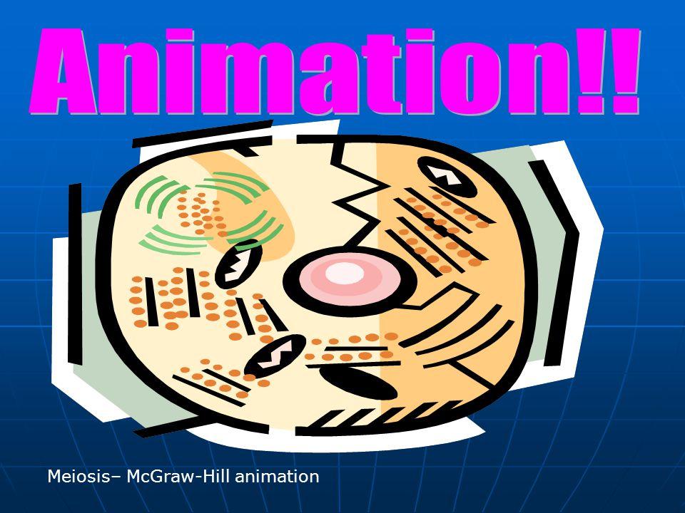 Meiosis– McGraw-Hill animation