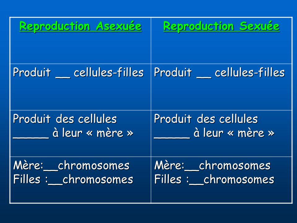 Reproduction Asexuée Reproduction Sexuée Produit __ cellules-filles Produit des cellules _____ à leur « mère » Mère:__chromosomes Filles :__chromosomes