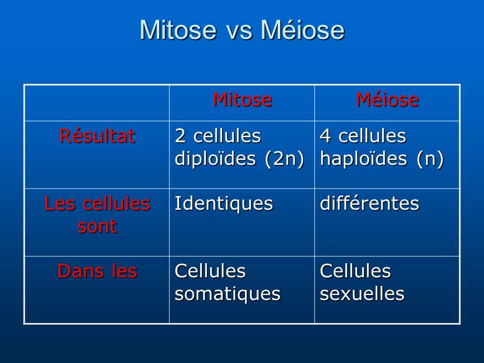 Mitose vs Méiose MitoseMéiose Résultat 2 cellules diploïdes (2n) 4 cellules haploïdes (n) Les cellules sont Identiquesdifférentes Dans les Cellules somatiques Cellules sexuelles