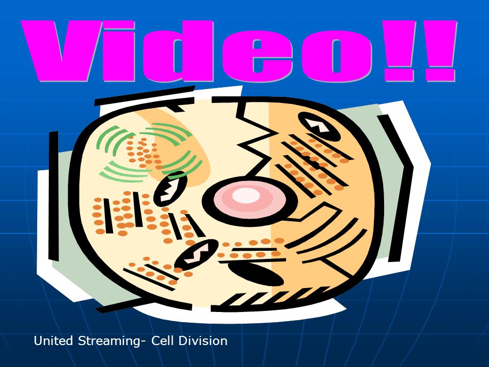 United Streaming- Cell Division