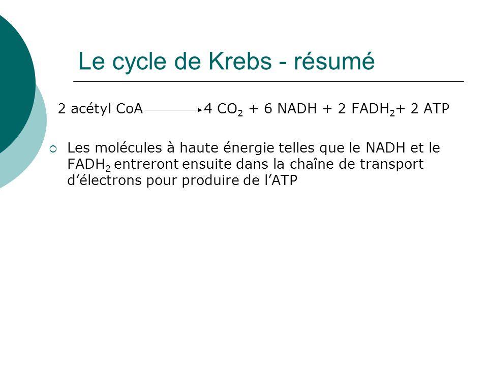 Le cycle de Krebs - résumé 2 acétyl CoA 4 CO 2 + 6 NADH + 2 FADH 2 + 2 ATP Les molécules à haute énergie telles que le NADH et le FADH 2 entreront ens