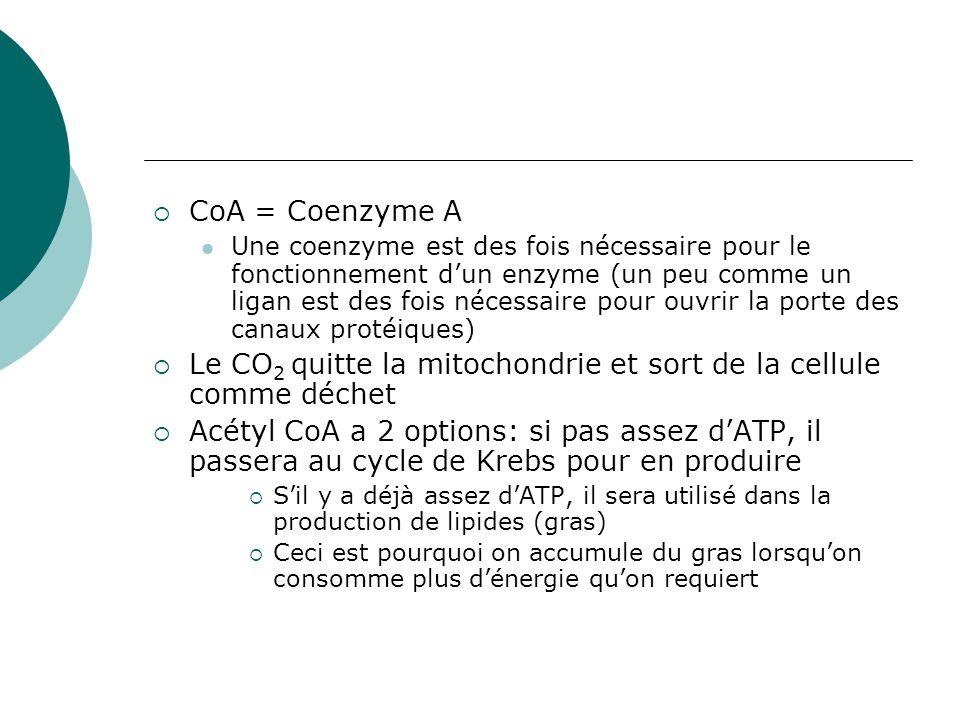 Le cycle de Krebs Continue dans la matrice mitochondriale 2 Acétyl-CoA à 2 carbones chaque (de la réaction de transition) entrent le cycle Ils se combineront avec une molécule accepteur à 4 carbones = une molécule à 6 carbones Autour du cycle, on enlévera le dioxyde de carbone alors 6 carbones 5 carbones 4 carbones http://hrsbstaff.ednet.ns.ca/psgeddes/BI OL11/energy/aerobic_resp.mov http://hrsbstaff.ednet.ns.ca/psgeddes/BI OL11/energy/aerobic_resp.mov