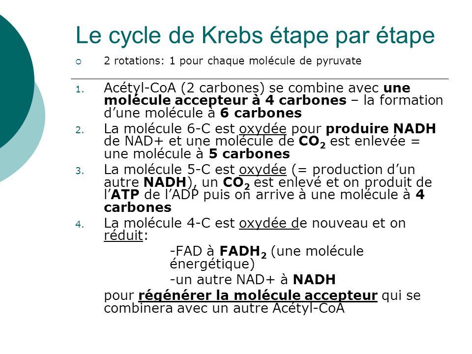 6 carbones 5 carbones 4 carbones Molécule accepteur de 4 carbones Agent oxydeur NAD+ est réduit en acceptant des hydrogènes de la molécule de 6-C Agent oxydeur FAD est réduit en acceptant des hydrogènes de la molécule de 6-C Le cycle de Krebs fait 2 rotations pour chaque molécule de glucose convertie en pyruvate en glycolyse.