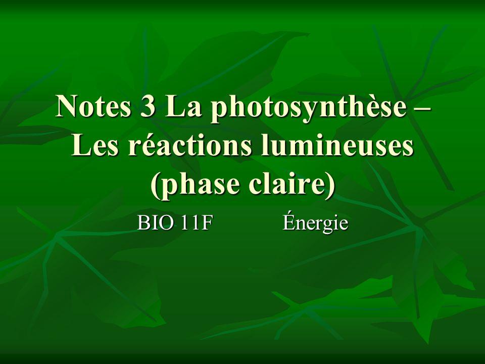 Les réactions lumineuses Ont lieu durant le jour car lénergie du soleil est requise Ont lieu durant le jour car lénergie du soleil est requise Produisent ATP et NADPH qui donnent de lénergie au deuxième étape de la photosynthèse : LE CYCLE DE CALVIN Produisent ATP et NADPH qui donnent de lénergie au deuxième étape de la photosynthèse : LE CYCLE DE CALVIN Utilisent leau Utilisent leau Location: sur la membrane thylakoïdale dans la chloroplaste Location: sur la membrane thylakoïdale dans la chloroplaste
