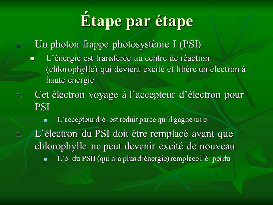 Étape par étape 6. Un photon frappe photosystème I (PSI) Lénergie est transférée au centre de réaction (chlorophylle) qui devient excité et libère un